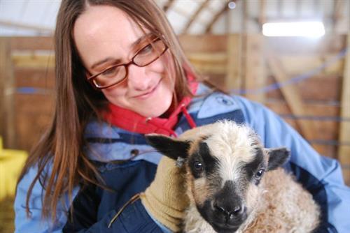 Tracy birthing lambs.