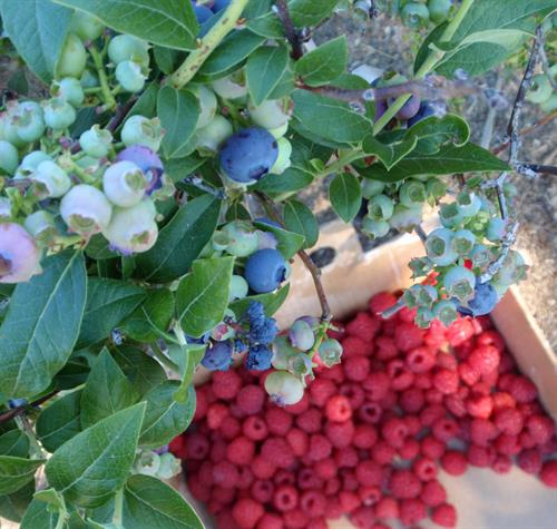 Bayfield is Wisconsin's Berry Capital, home to 14 fruit farms and orchards