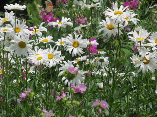 Gallery Image 2011-07-23_02.09.22.jpg
