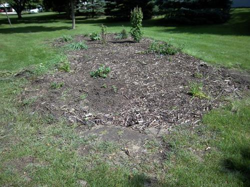 The new rain garden
