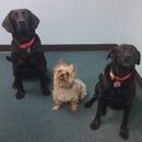 Welcoming Committee, Rosie, Killer & Bailey