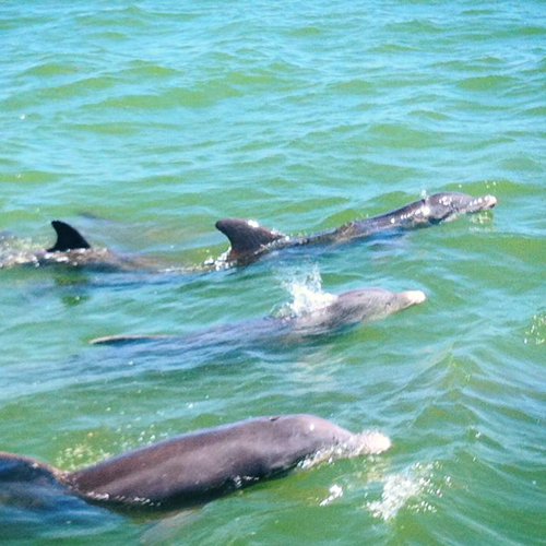 3 dolphin cruises! Morning, Afternoon and at Sunset!