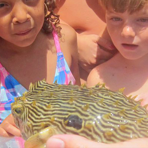 Get an upclose encounter with seahorses, starfish and pufferfish!