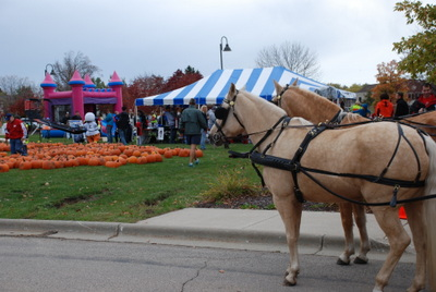 Horse and carriage rides at Oak Bank's Great Pumpkin Give Away