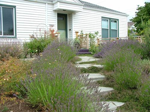 Flagstone steps, lavender, and perennials lead to the front door.