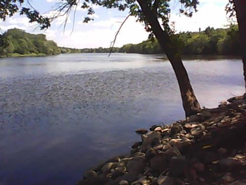 Site 71 view of Mississippi River.  Photo 7-29-2015