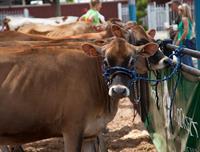 Fair Animals & Livestock