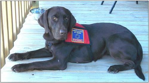 Suzie is our first Service Dog given to a 100% disabled Viet Nam Veteran