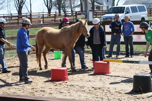 Horses helping teach thinking outside the box