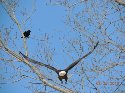 Eagles and wild life in Lakeville