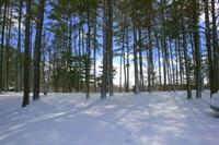 Gallery Image snowy_trees_2.jpg