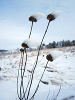 Prairie trails are beautiful in winter.
