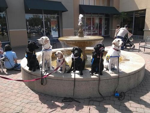 Gallery Image Puppies_at_the_fountain..jpg