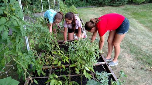 Harvesting, weeding, and planting at the Raising Rochester garden at Crittenton Hospital