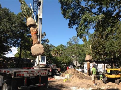 Palm Tree Installation