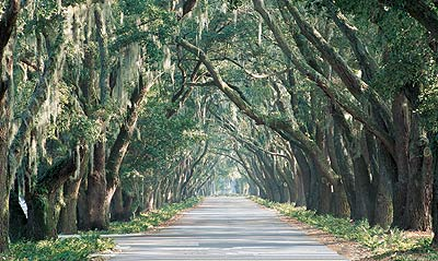 Avenue of Oaks