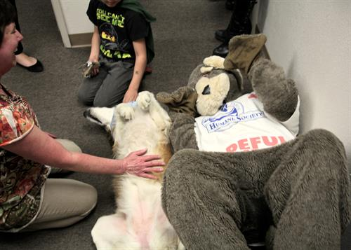 Sadie and Hopeful Henry getting belly rubs at the Open House