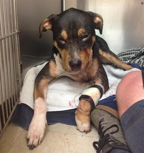Little Tonka got shot in the face but the community pulled together to get him all fixed up!