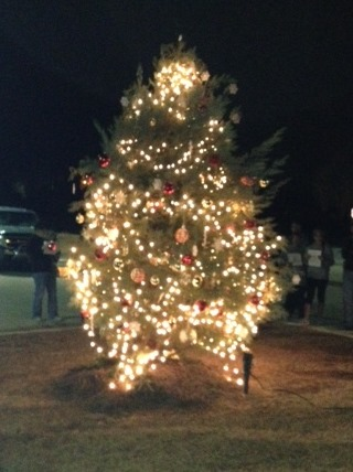 Chapin Christmas Tree
