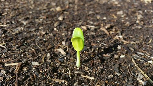 Plant a Seed - Change a Life!