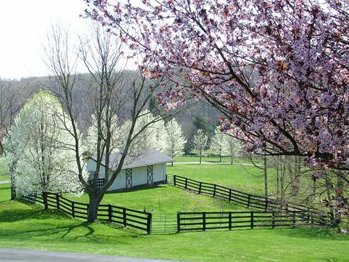 The Paddock in the Spring from the Porches
