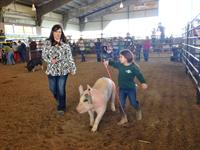 Iberville/ West Baton Rouge Parish Jr.Livestock Show