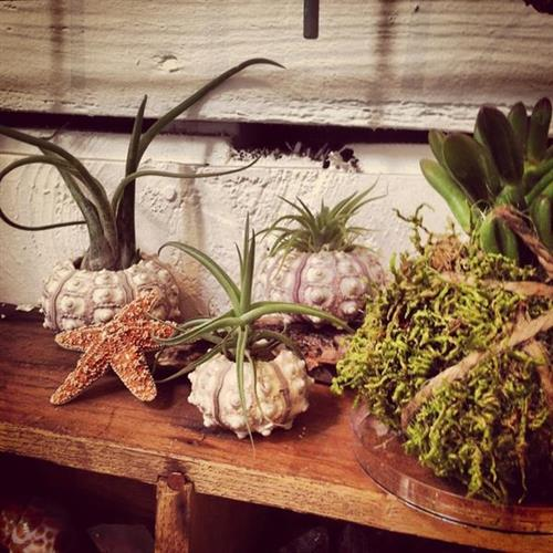 A few of our terrarium treasures.