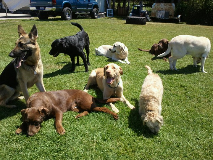 Happy Tails Doggy Day Care & Grooming
