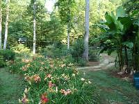 Jungle Paradise Gardens