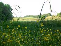 Fausett Farms
