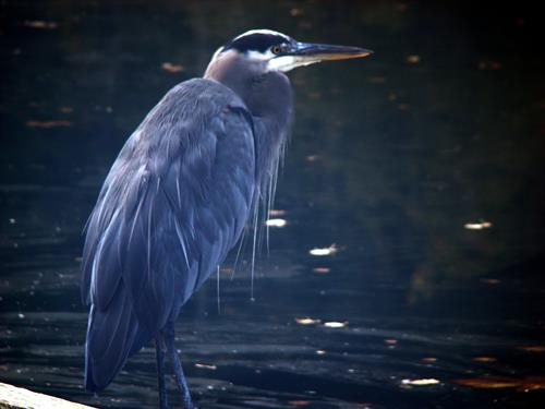 Wildlife includes herons, otters, eagles, seals and other marine life.