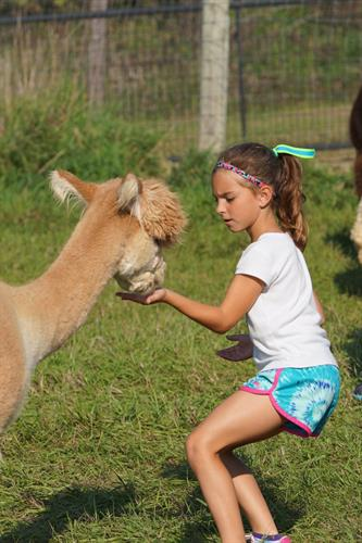 Alpaca Farm Day 2014