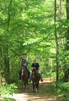 Day riders on the horse trails