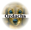 Ozdachs Consulting
