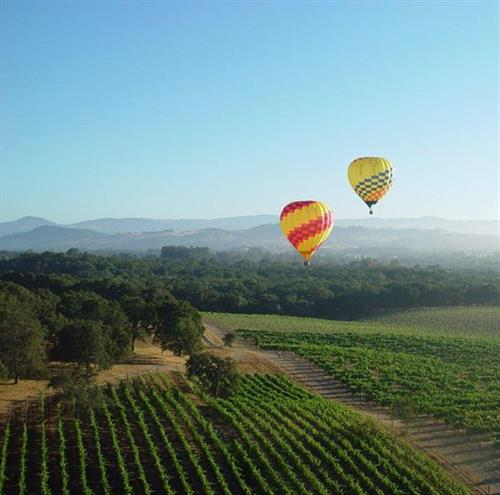 Balloons over Sonoma County