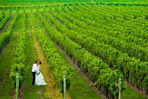 Winery Wedding Central