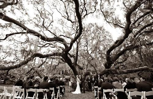 Wedding at Greyfield under the beautiful Live Oak tree