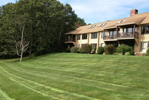 Beautiful Lawn Lines!