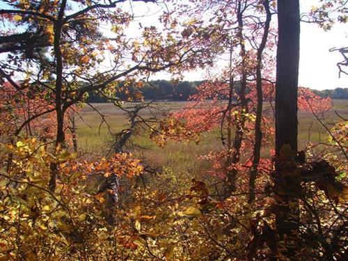 Harwich Conservation Lands in Fall Colors