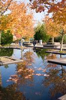 Fall at The Oregon Garden