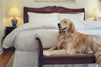 Pet Friendly Palm Beach