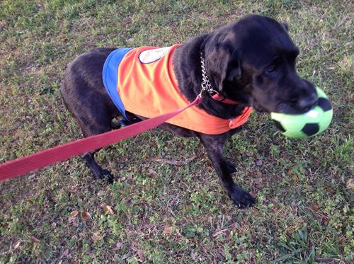 Mr. Moore working and playing...He is a Hearing Dog
