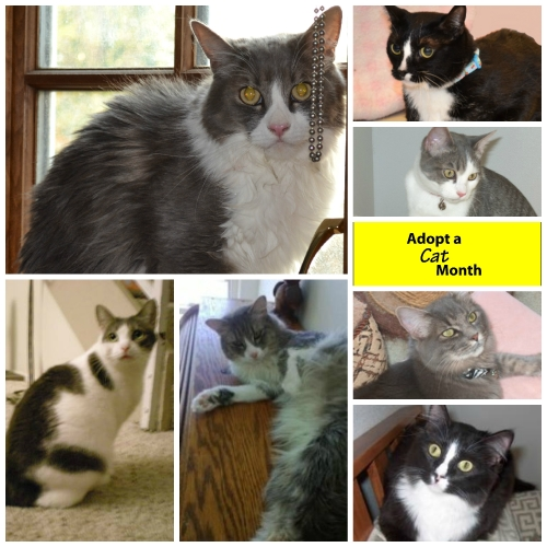 June adopt a CAT month