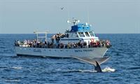 Gallery Image Dana-Pride-Whale-Watching.jpg