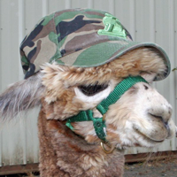 If I wear my camo hat they can't find me for shearing.