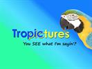 Tropictures