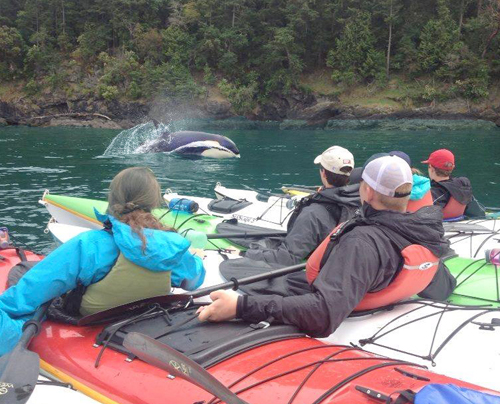 5-hour Orca Search by Kayak