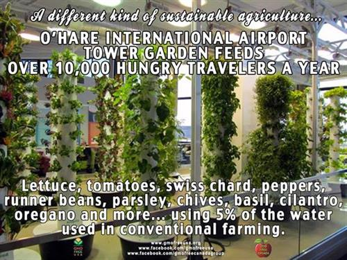 Our Tower Gardens® are in Chicago O'Hare International Airport!   26 of them!