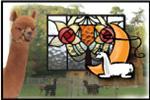 Lardworks Studio at Lasso the Moon Alpaca Farm