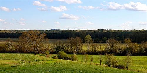 Green Meadows and Mountain Views